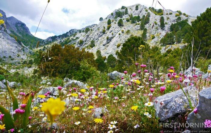 Vandringar i Sierra de Grazalema - orm-, ko-, eller en gnutta höjdskräck? - First Morning